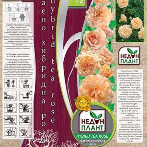 Светло-оранжева - чаено хибридна роза - N12