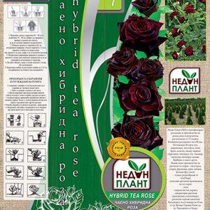 Тъмно червена - чаено хибридна роза - N7